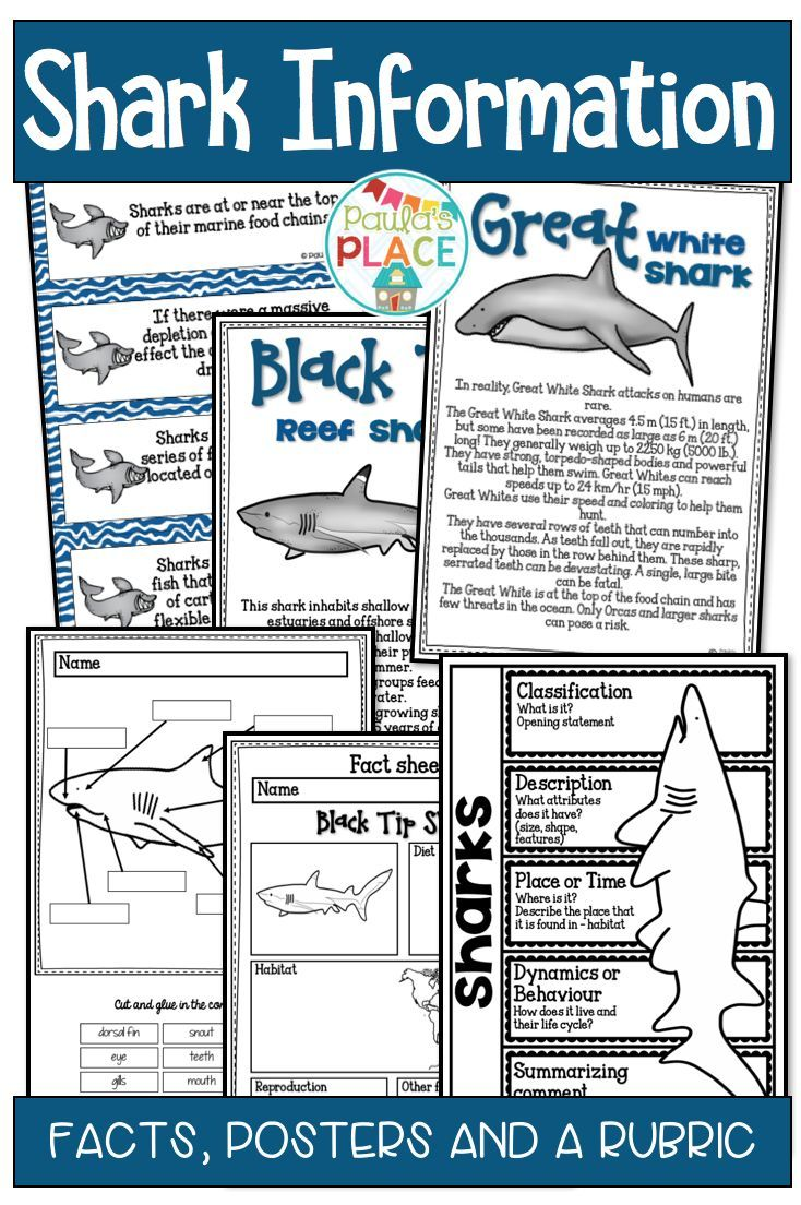 This Pack Provides Information About Sharks This Information Will Assist In The Writing Of Your Own Informa Shark Information Informational Writing Shark Week [ 1104 x 734 Pixel ]