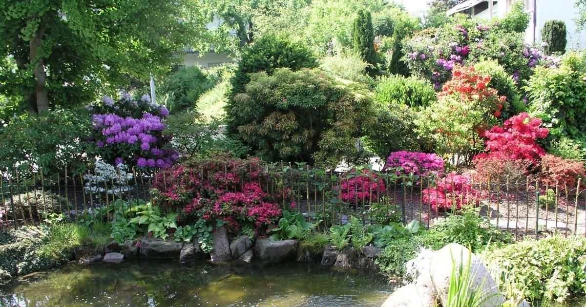Prächtig Rhododendrongarten: Die schönsten Begleit-Pflanzen | Staudenbeete &GL_73
