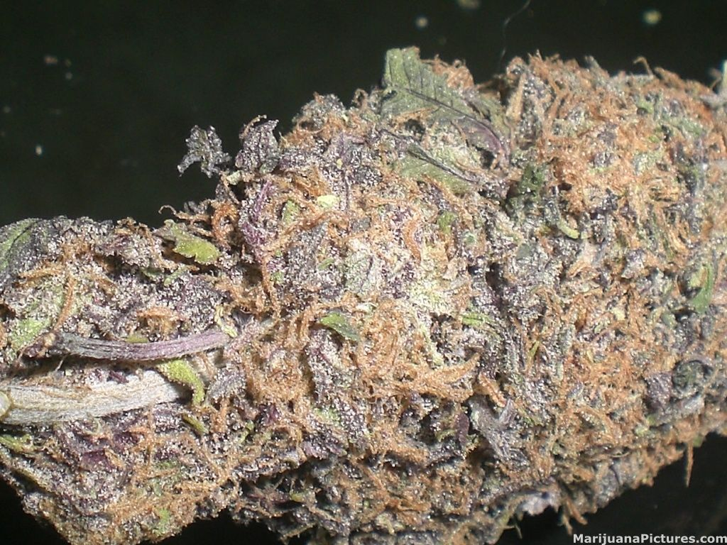 Purple Crack Weed Strain Colorful weed, you know I like it
