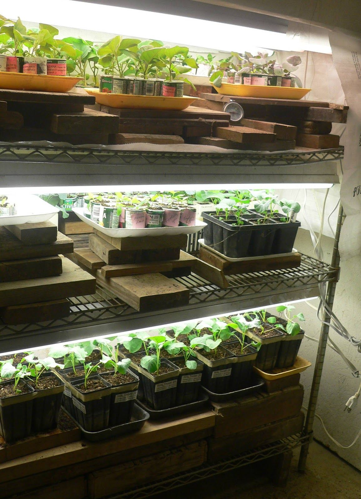 Lights under plant shelves google search box pinterest plant