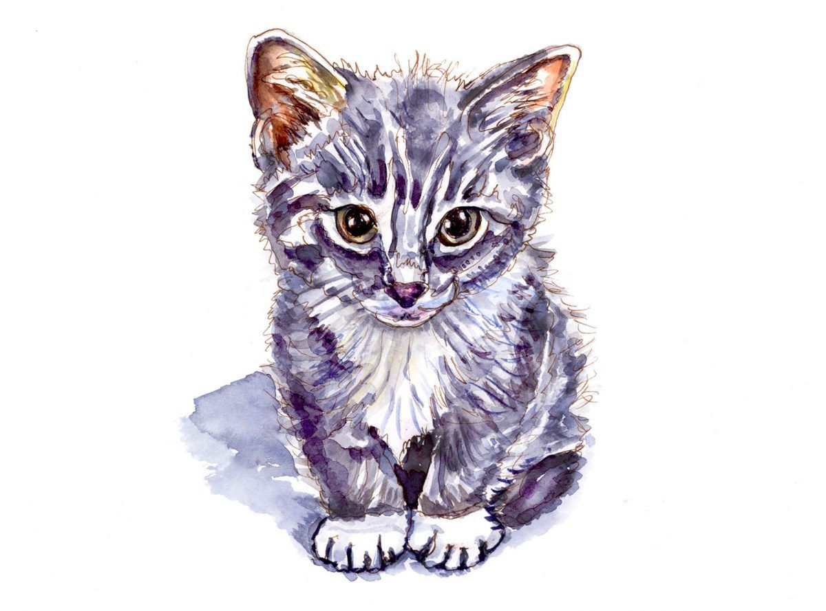 If I Could Have A Kitten Cat Sketch Sketches Watercolor Sketch