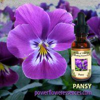 Image Pansy Flower Essence Pansies Flowers Flower Essences Violet Flower