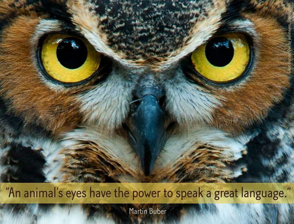 ordsprog med fugle