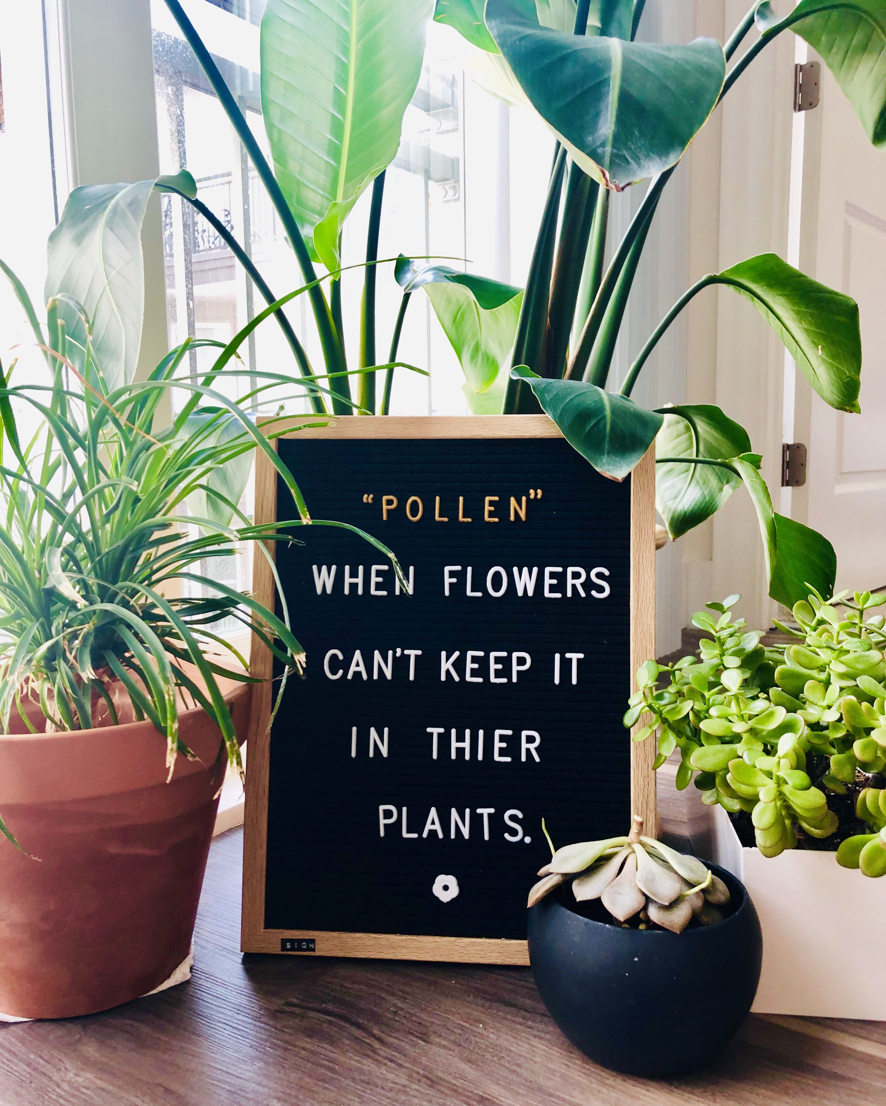Funny spring plant quote for you letterboard Plants