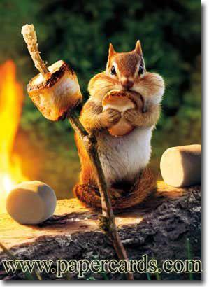 Chipmunk Roasts Marshmallow Animals Dressed Up Funny