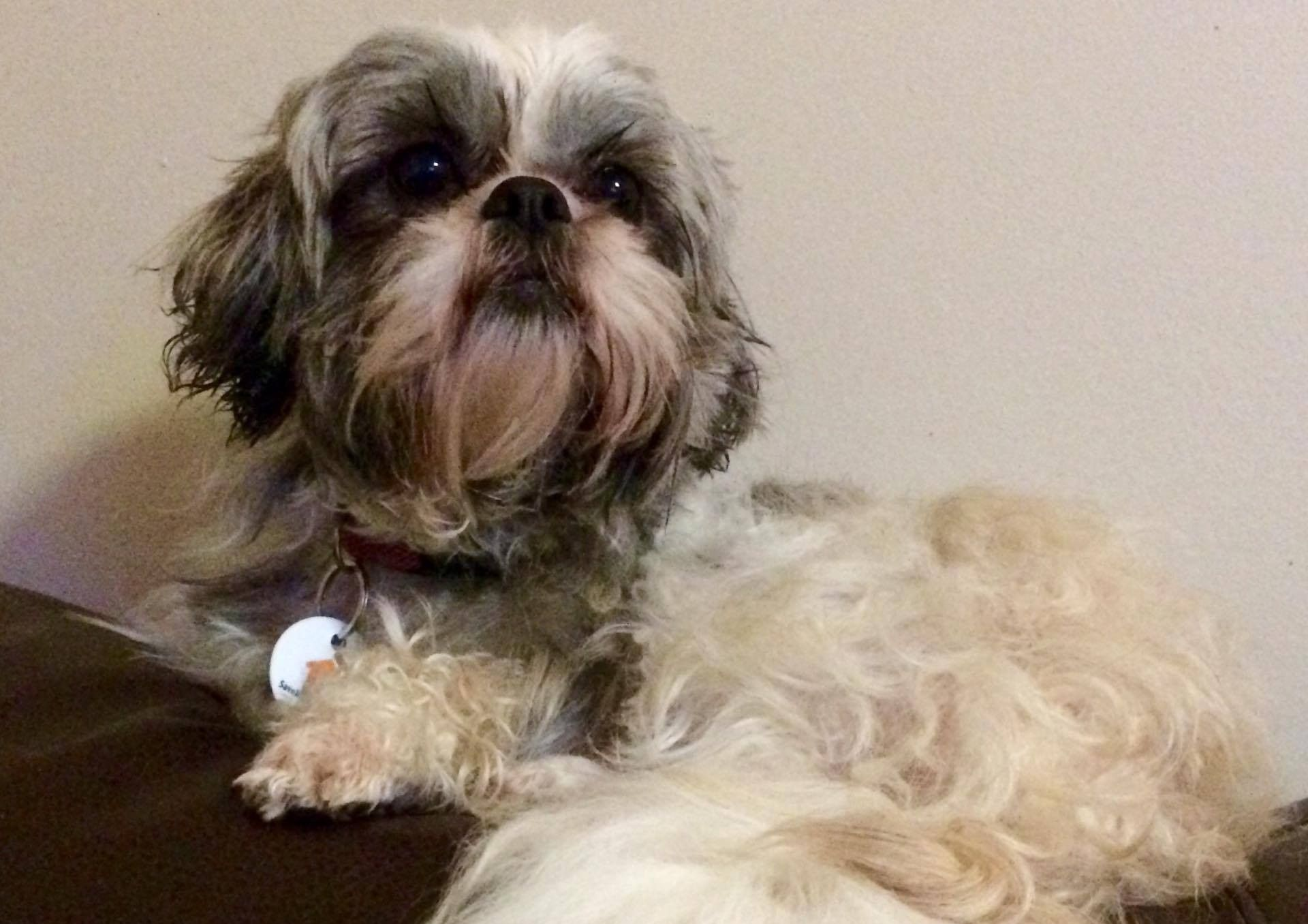 Pepper Speciality Female Spayed Fee 400 Foster Location