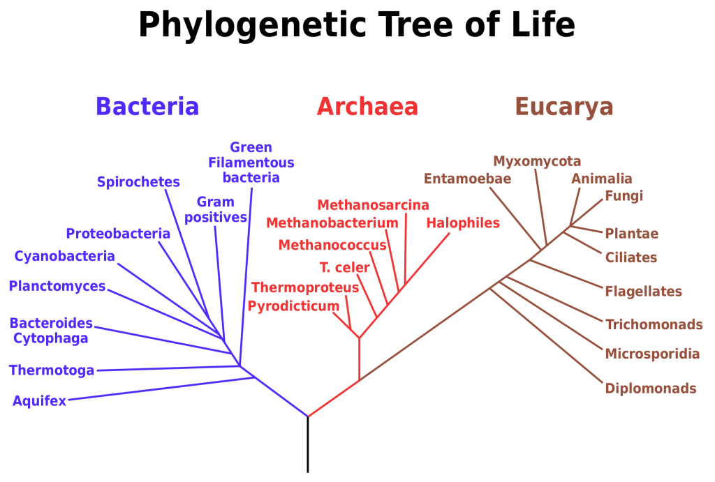Fact Sheet Rrna In Evolutionary Studies And Environmental Sampling Phylogenetic Tree Tree Of Life Life Map