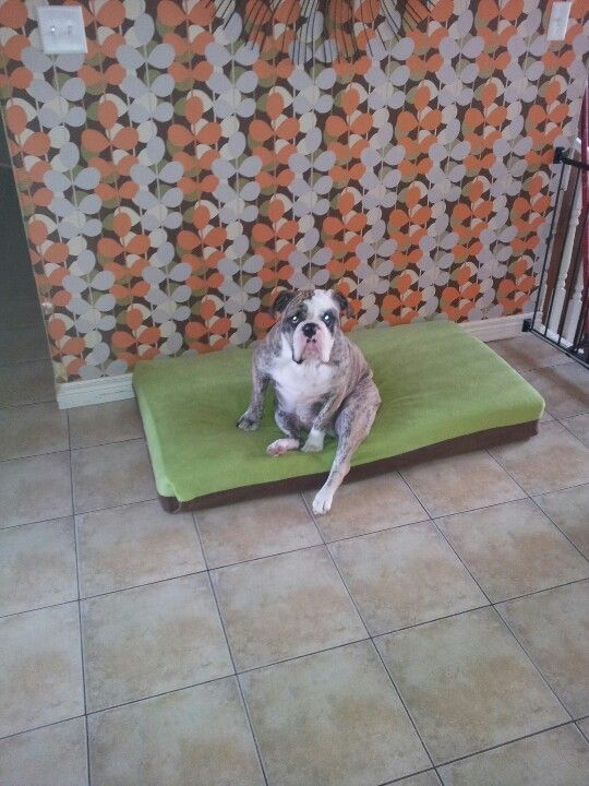 dog bed made from crib mattress repurpose diy pinterest crib mattress dog beds and mattress. Black Bedroom Furniture Sets. Home Design Ideas