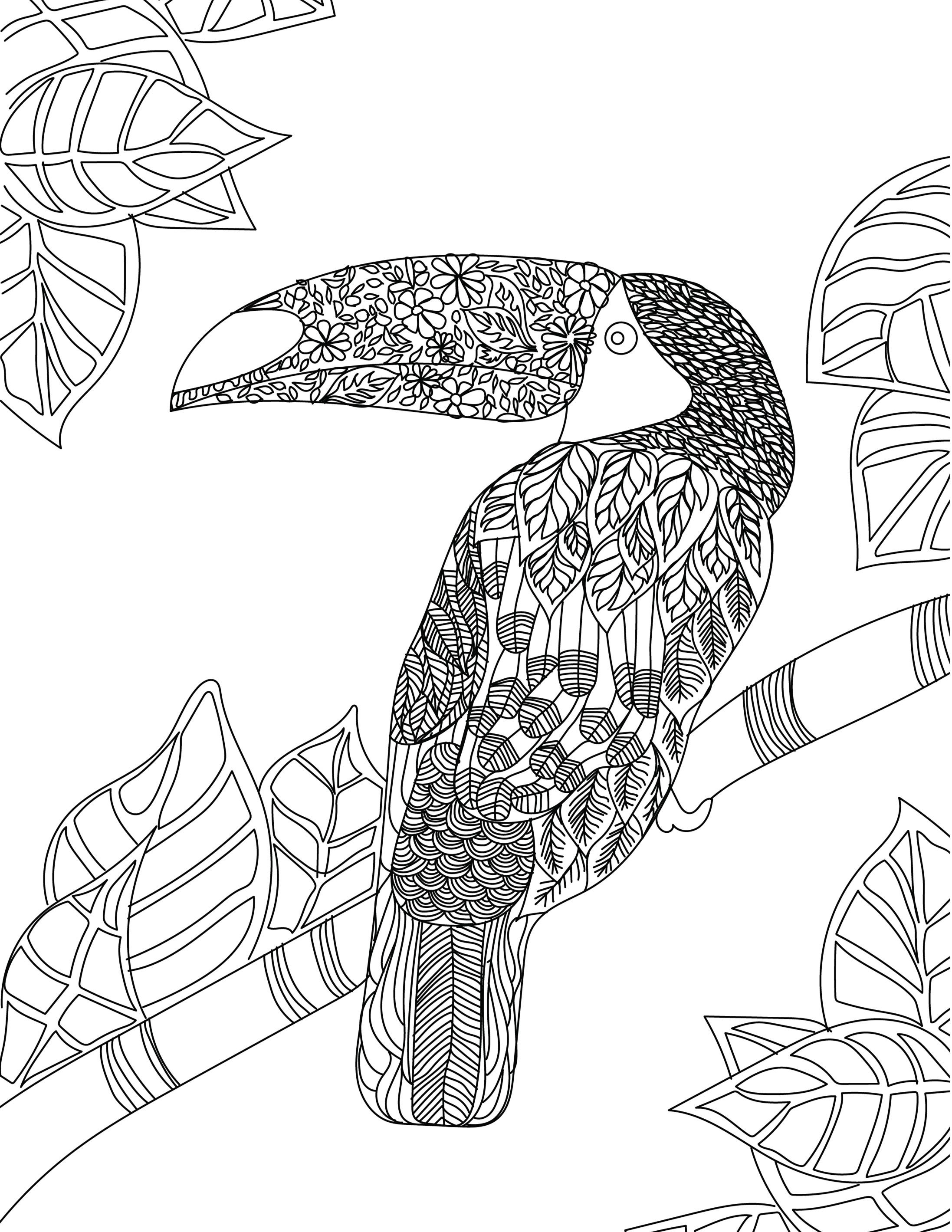 Toucan Adult Colouring Page Colouring In Sheets Art Craft