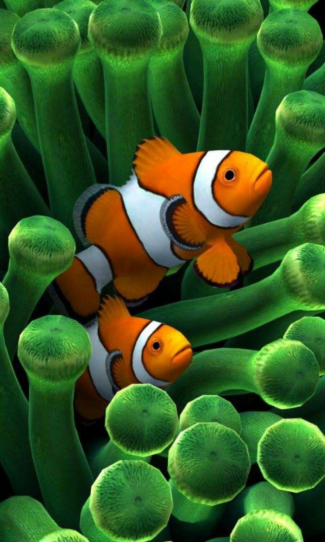 Pin By Johnnie M Jamaica On Underwater Clown Fish Fish