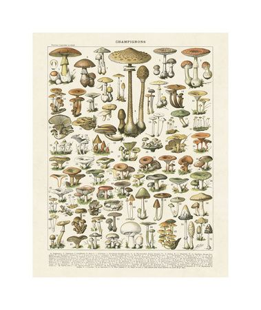 Botanical Charts Posters at AllPosters.com