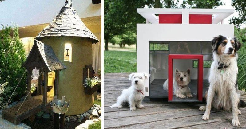 accessoires chiens originaux. Black Bedroom Furniture Sets. Home Design Ideas