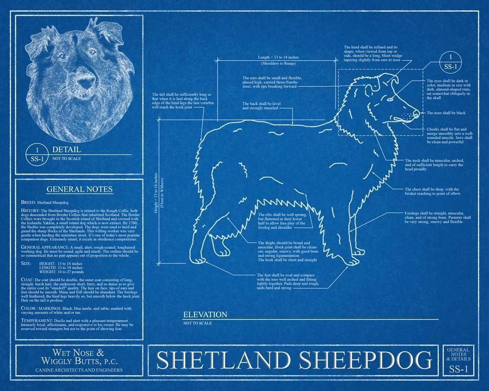 Shetland sheepdog blueprint this shetland sheepdog blueprint is a shetland sheepdog blueprint this shetland sheepdog blueprint is a wonderful piece of art that will make a great gift optional personalize this print with malvernweather Choice Image