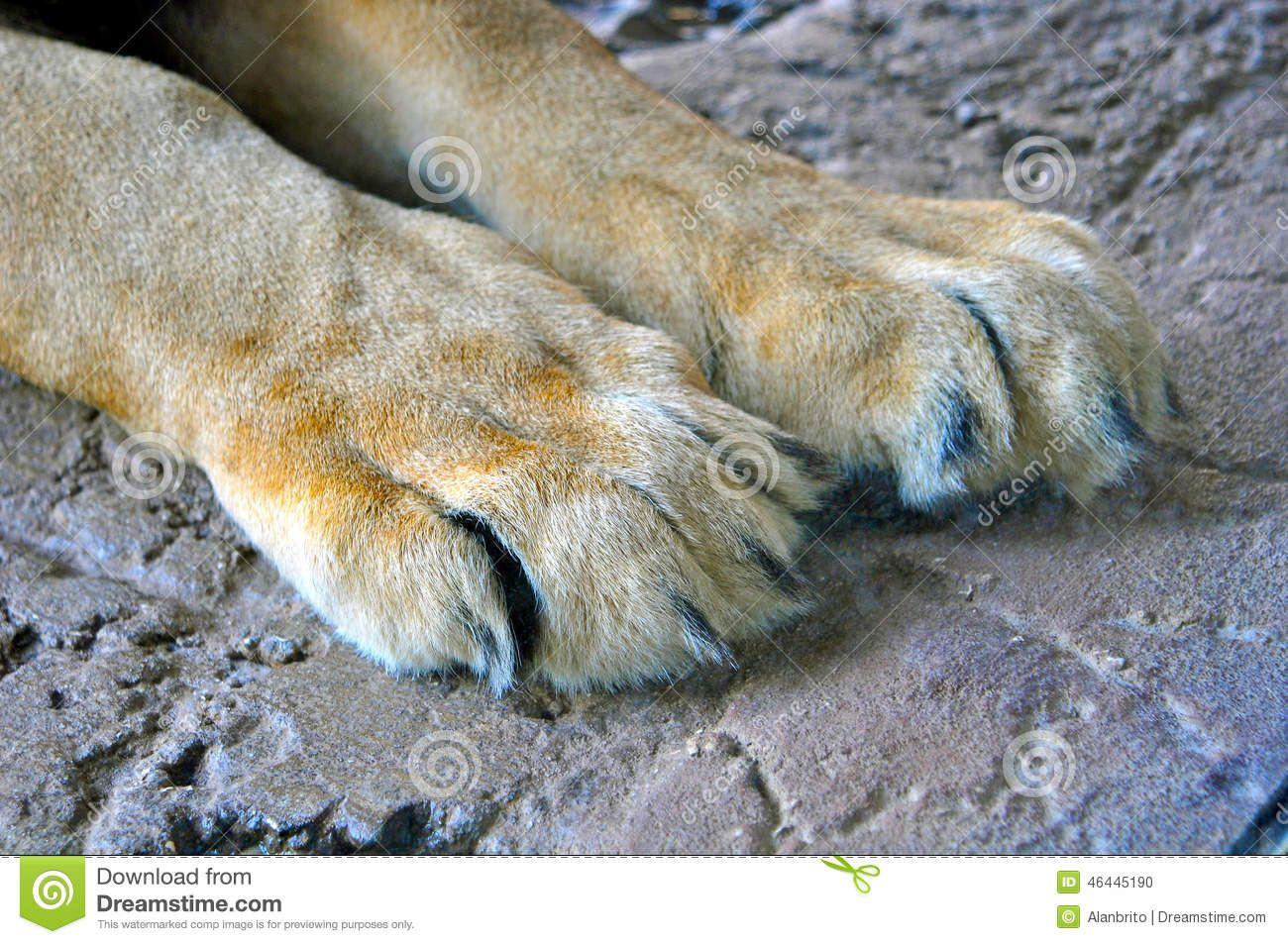 Resultado de imagen de pata de leon