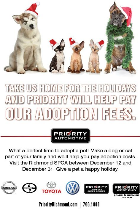 From December 12th Through December 31st Visit The Richmond Spca And Priority Automotive Will Pay For Your Adoption Fees Adoption Costs Chesapeake Priorities