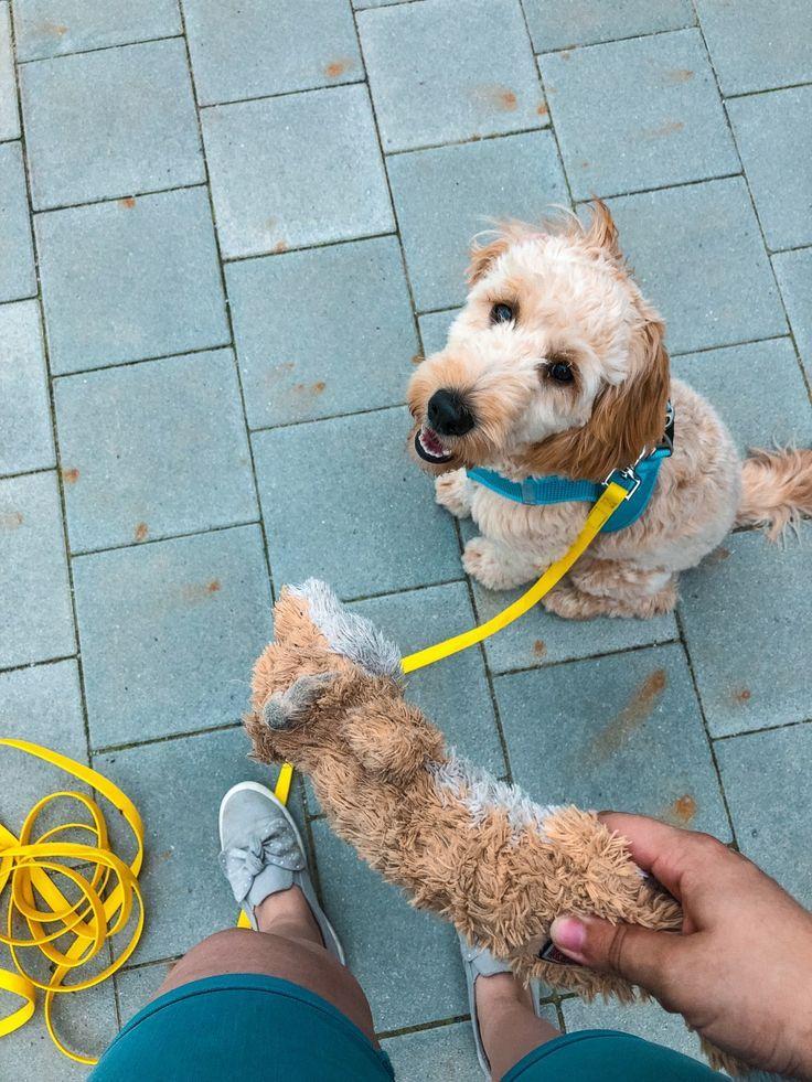 Pin auf Bindung Mensch und Hund
