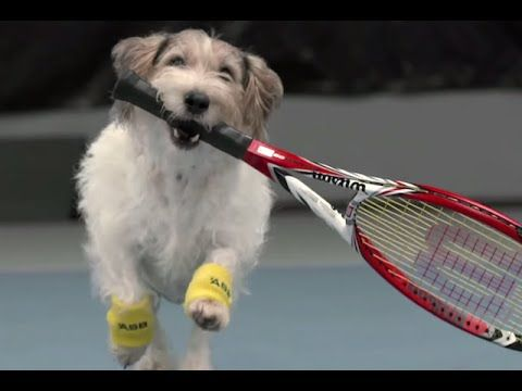 Venus Williams and The Best Ball Boys in the World ASB - YouTube