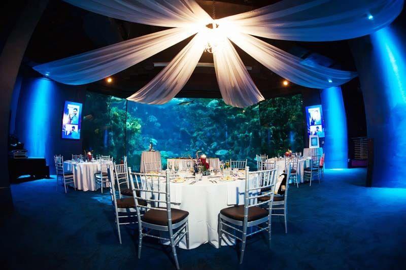 Blue And Purple Florida Aquarium Wedding Tampa Venue Photo Limelight Photography Orange Blossom Bride Www Orangeblossombride Click