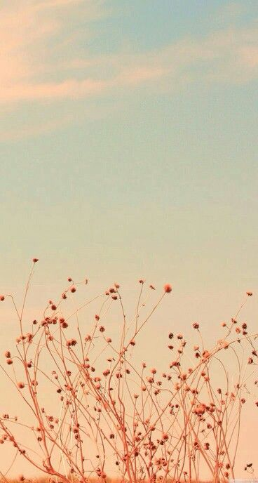 Floral Sunset Iphone Background Vintage Iphone Wallpaper Vintage Vintage Flowers Wallpaper