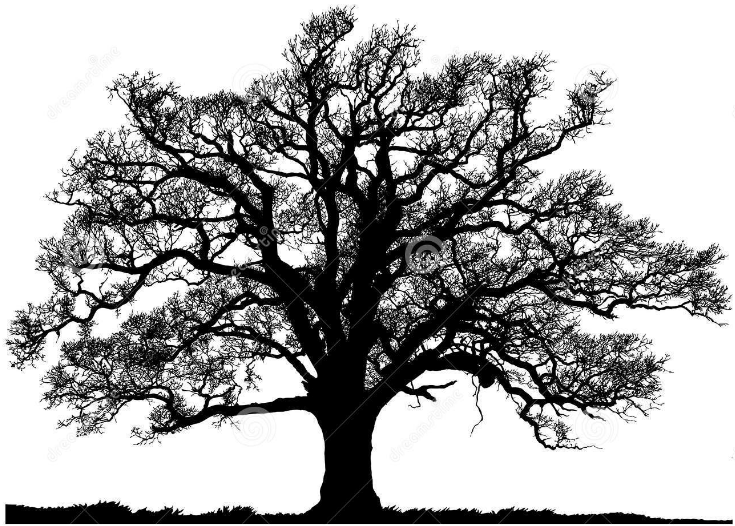 Image Result For Tree Live Oak Tree Tattoo Oak Tree Silhouette Oak Tree Tattoo