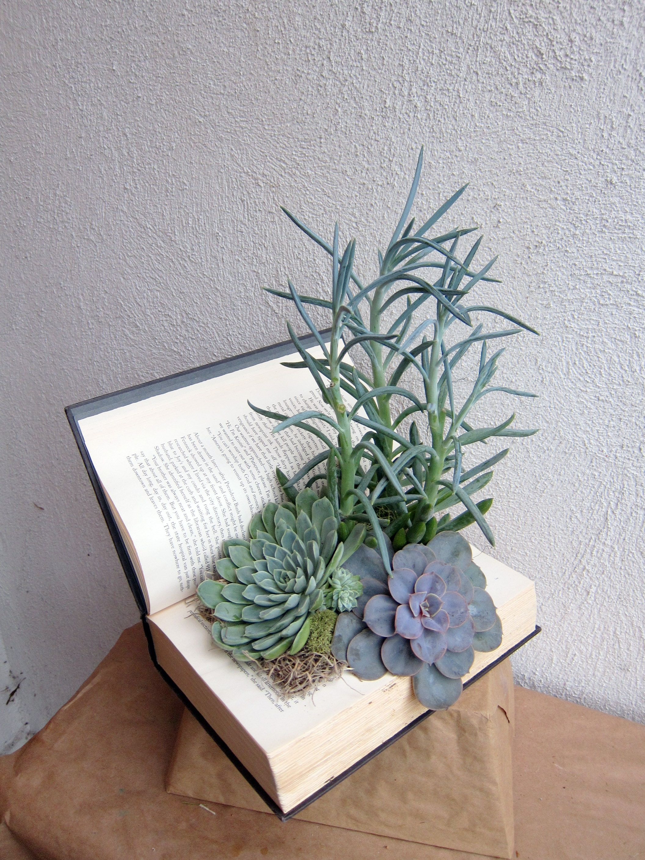 Celsia floral book potted plant succulent garden diy