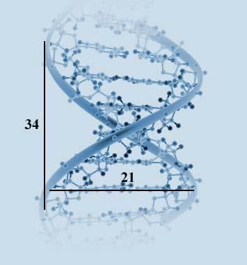 DNA The source of beauty in organisms, The DNA molecule, the - new molecular blueprint definition
