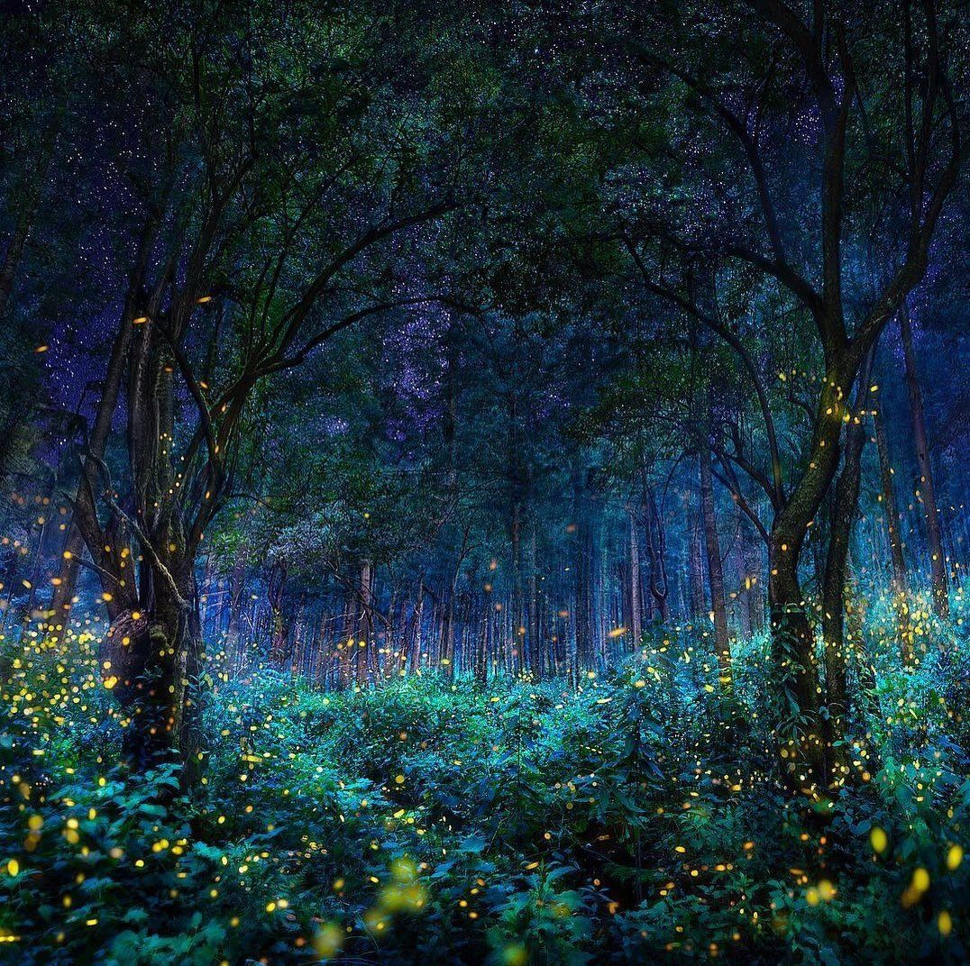 Brindille On Twitter Landscape Photography Amazing Places On Earth Night Forest
