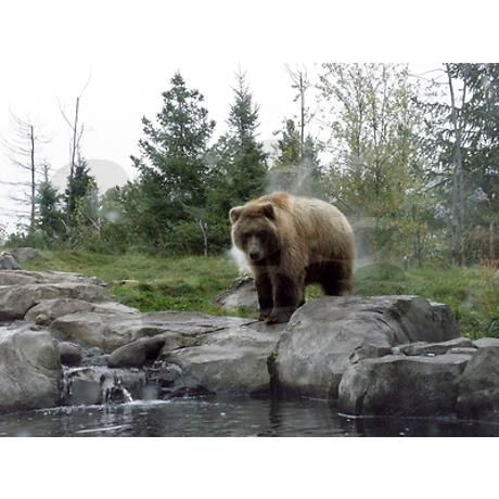 Grizzly Shower Curtain on CafePress.com $60