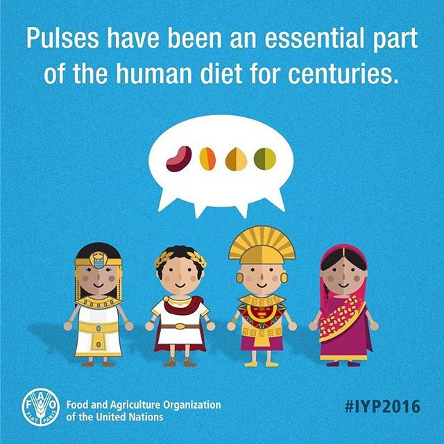 Reposting from one of my favourite accounts @unfao as we are almost at the end of #IYP2016, international year of pulses..... 💕🌿🙌🏼🌎👩🏼‍🌾 Pulses are a vital source of plant-based proteins and amino acids for people around the globe & have a key role in sustainable food production for food security and nutrition. What's your favourite dish that involves pulses? Mine has to be refried beans, hummus or daal 😍 #seedsofsustainability #pulses #unfao #iyp #unitednations #repost #infographic…