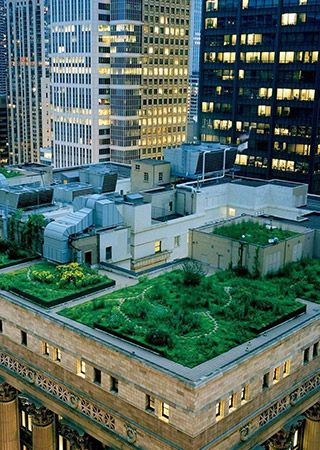 Chicago City Hall 20 000 Plants And 90 Kg Of Honey A Year Rooftop Garden Places In Chicago Chicago City