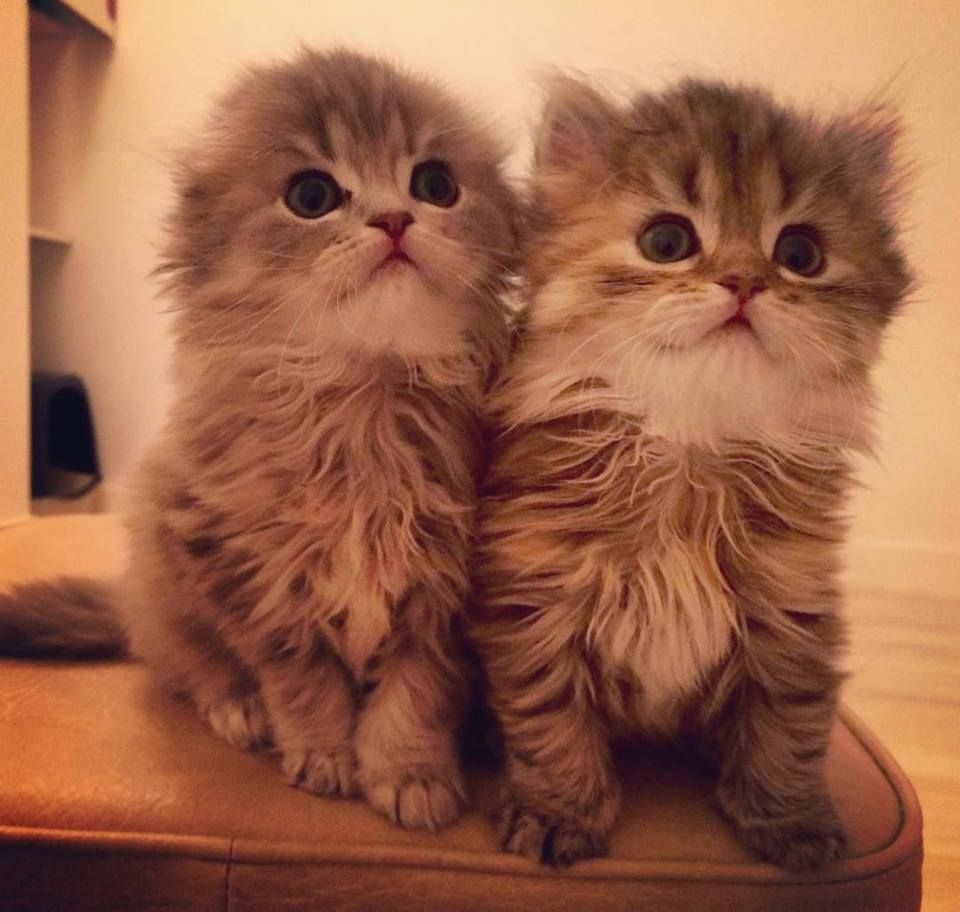 Gorgeous babies ❤