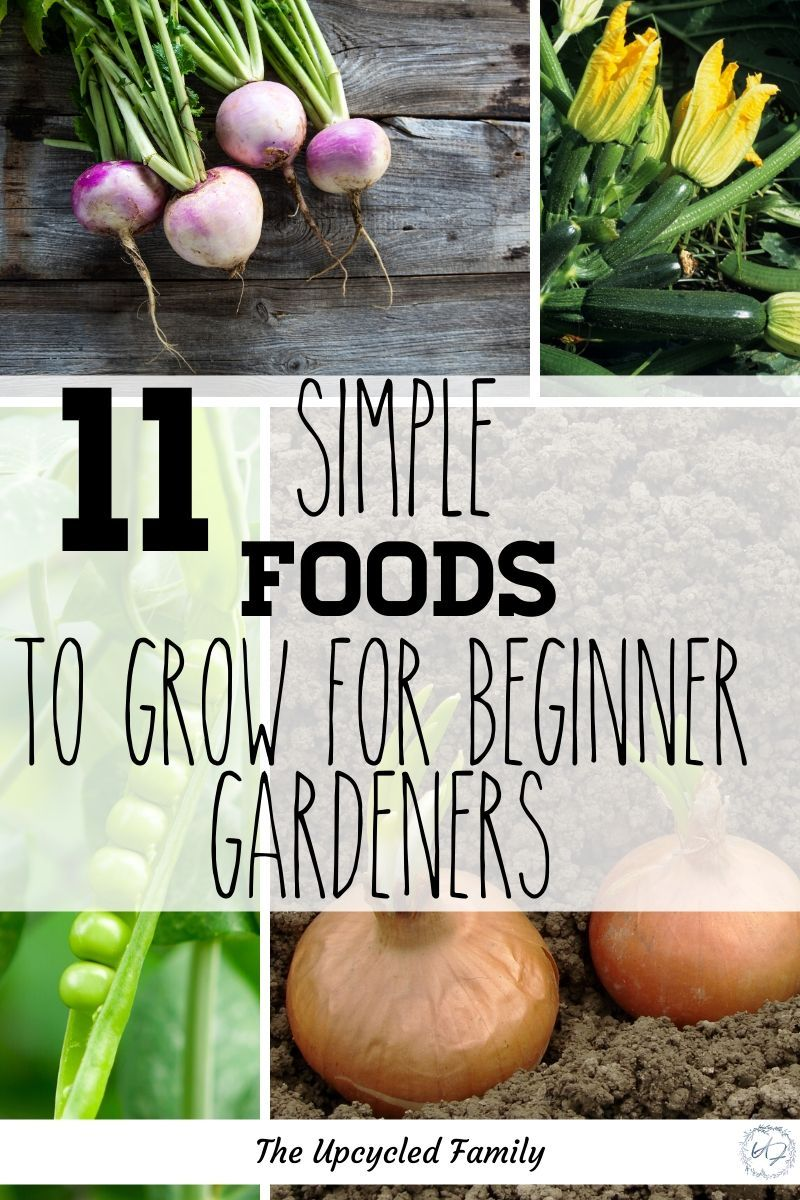 11 Seriously Easy To Grow Veggies Easy Vegetables To Grow