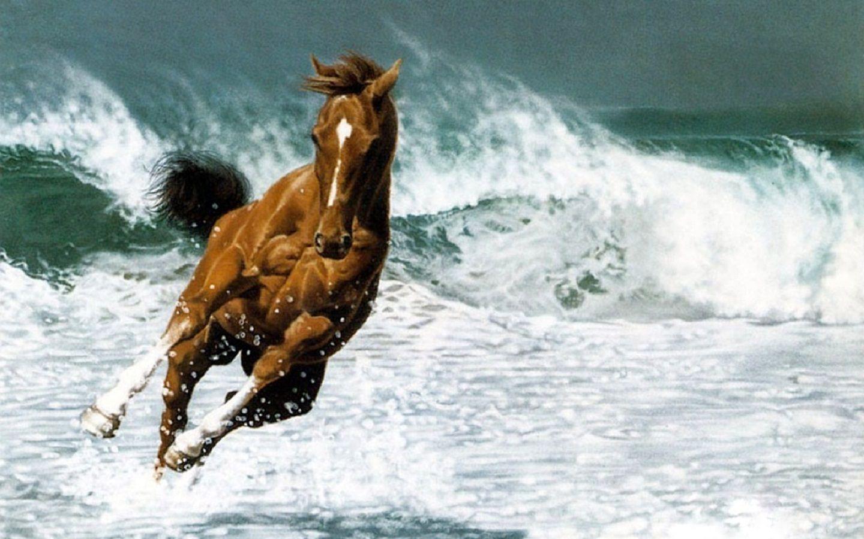 Good Wallpaper Horse Ocean - ba64a62fcd1d0294c939e76add070da9  You Should Have_569142.jpg