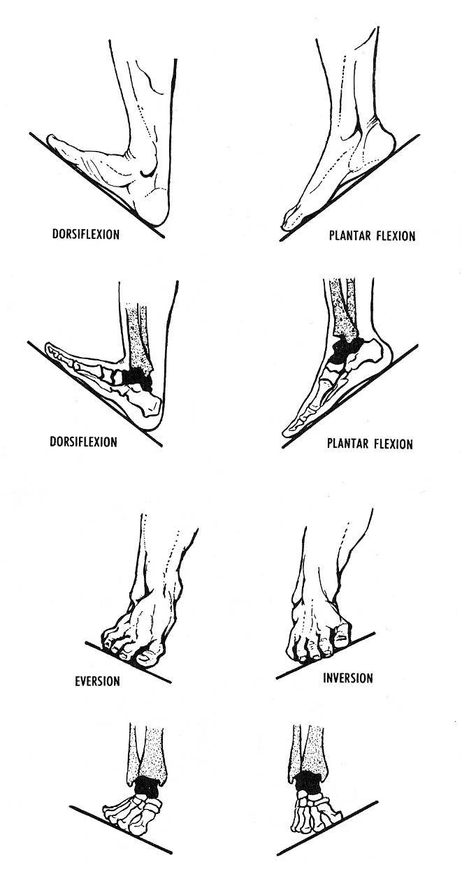 Posibilidades de movimiento de la articulación del pie