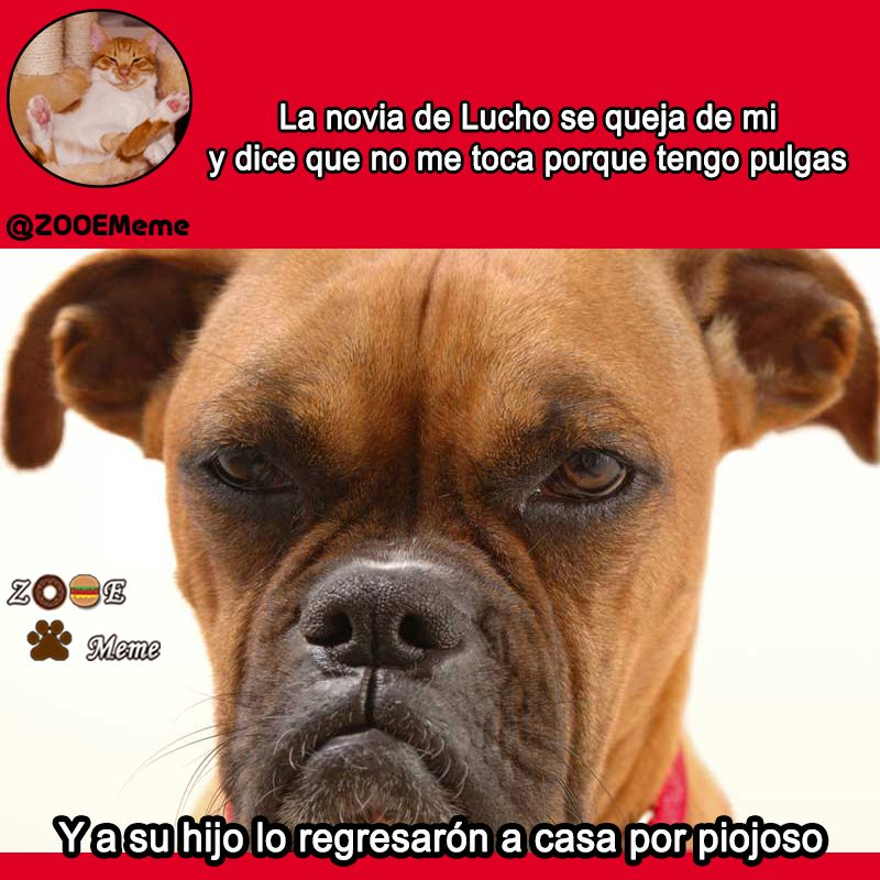 Memes Perros Lucho