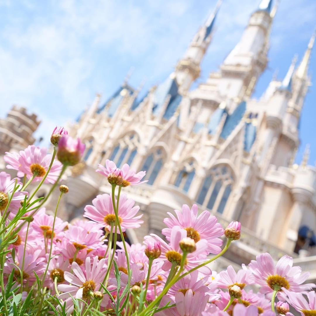 Purple hue of spring. 春色♪ #cinderellacastle #fantasyland #tokyodisneyland #tokyodisneyresort #margaretflowers #マーガレット #シンデレラ城 #ファンタジーランド #東京ディズニーランド #東京ディズニーリゾート