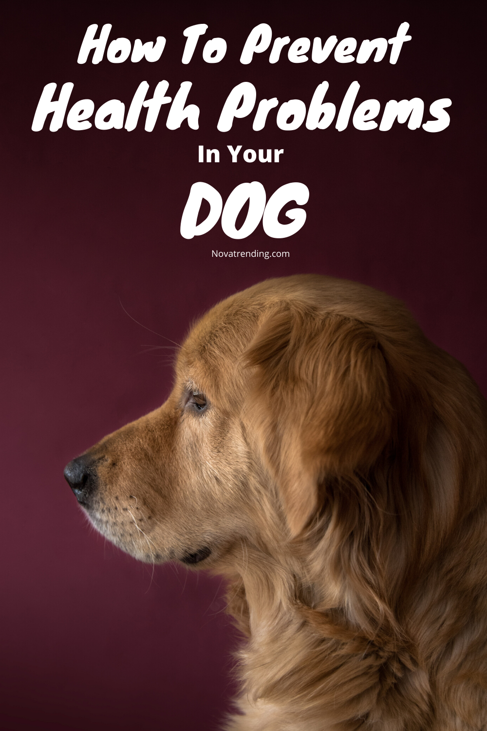 6 Tips To Prevent Health Problems In Dogs In 2020 With Images