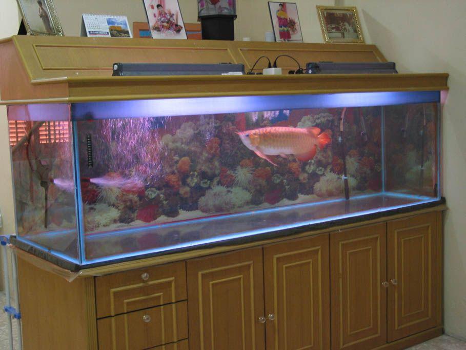 How I Care My Dragon Fish Tank Big Fish Tanks Aquarium