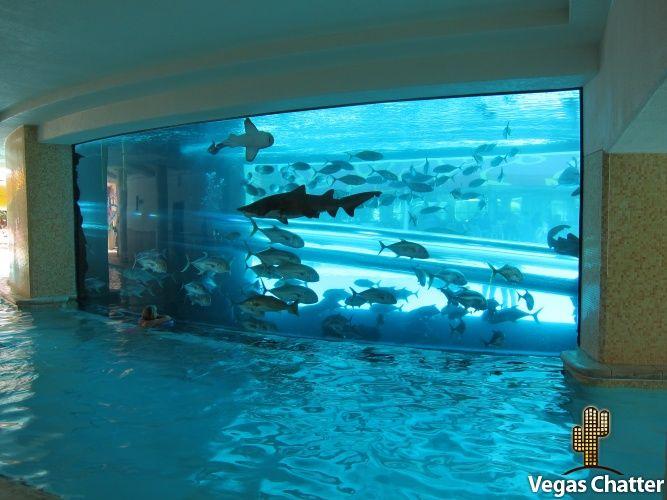 Home shark tank aquarium new shark tank tours aquarium for Small sharks for fish tanks