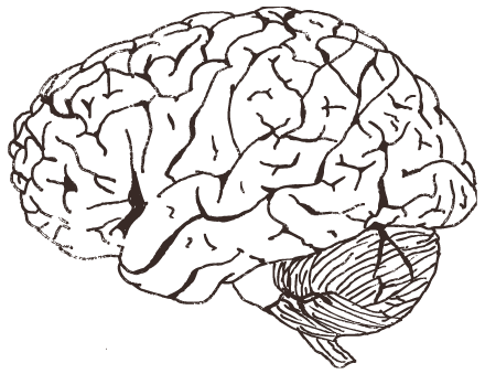Cognitive Neuroscience Materials for Teachers and Students