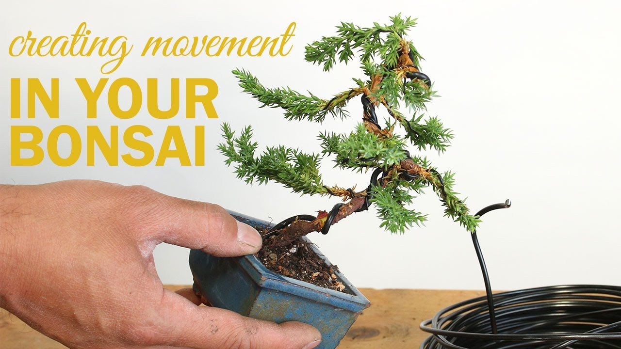 how to create movement in your bonsai tree wiring a bonsai tree rh pinterest com