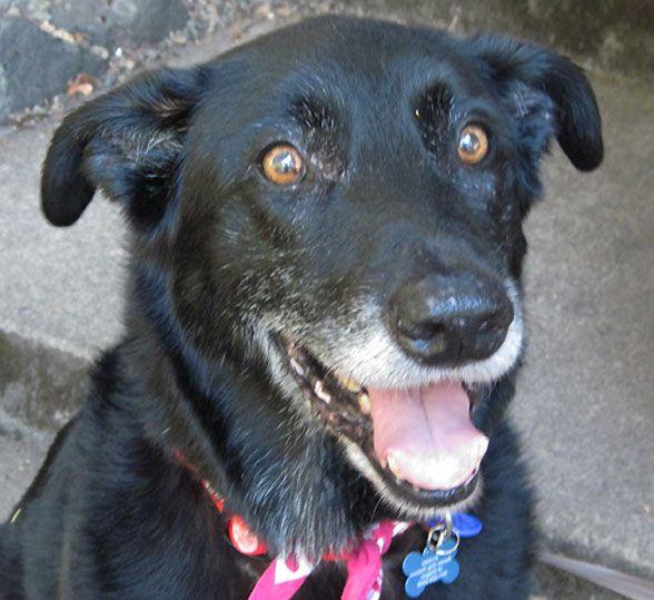 Adoptable Dog Of The Day Briar In Oregon Dog Adoption Animal
