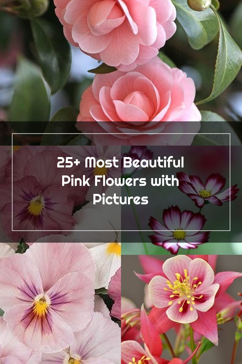 Most Beautiful Pink Flowers In The World Camellia Flower In 2020 Beautiful Pink Flowers Pink Flowers Camellia Flower