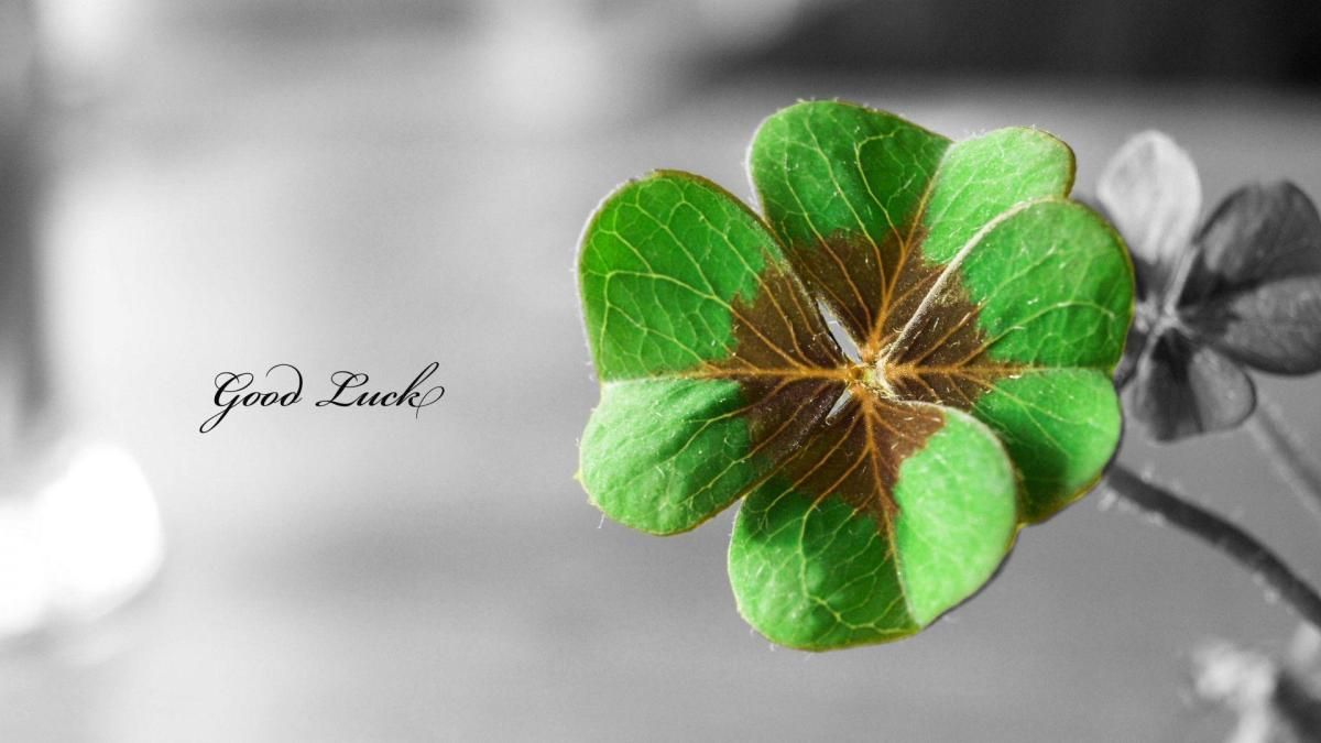 Wordpress Com Good Luck Clover Background Images Wallpapers Planting Flowers