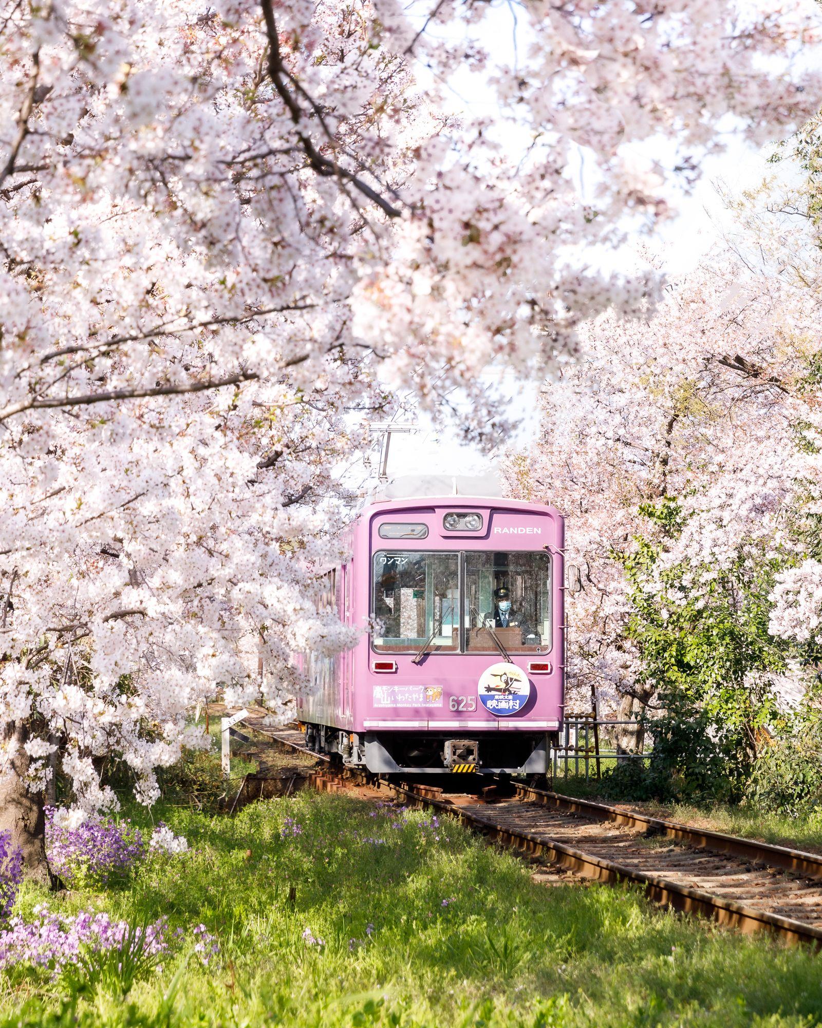 Top Sakura Photo In Japan The Sakura Train In Kyoto During Cherry Blossom Cherry Blossom Japan Japan Sakura Cherry Blossom