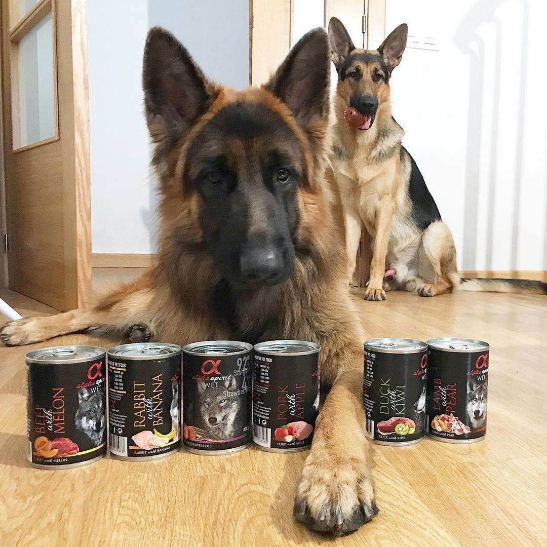#germanshepherd #gsd #dog #dogsofinstagram #gsdofinstagram #dogs #k #puppy #germanshepherdpuppy #gsdpuppy #dogstagram #germanshepherddog #germanshepherdsofinstagram #gsdstagram #dogoftheday #gsdlove #puppies #instadog #dogcrochetedsweaters