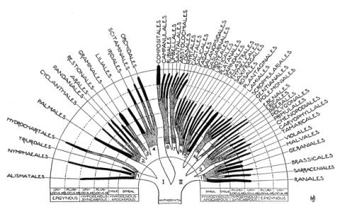 Trees of Life: A Visual History of Scientific Diagrams