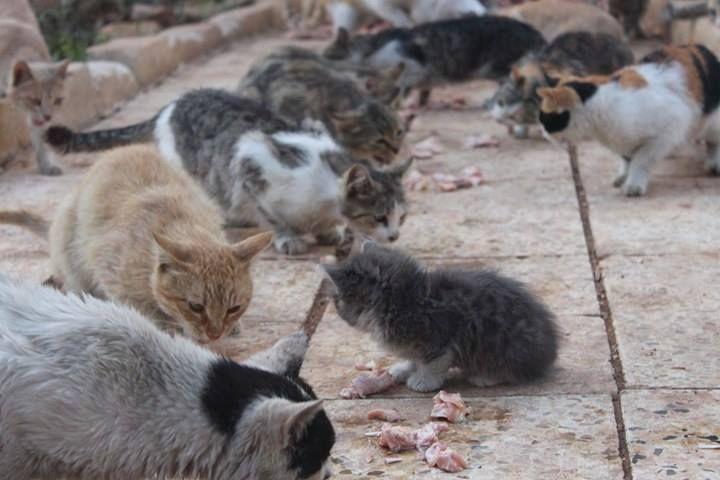 قطقوط صغير معنا اليوم عالغدا حلب سوريا قطط Cats A Cute Kitten Joining Our Lunch Today Aleppo Syria Cats Animals Meows
