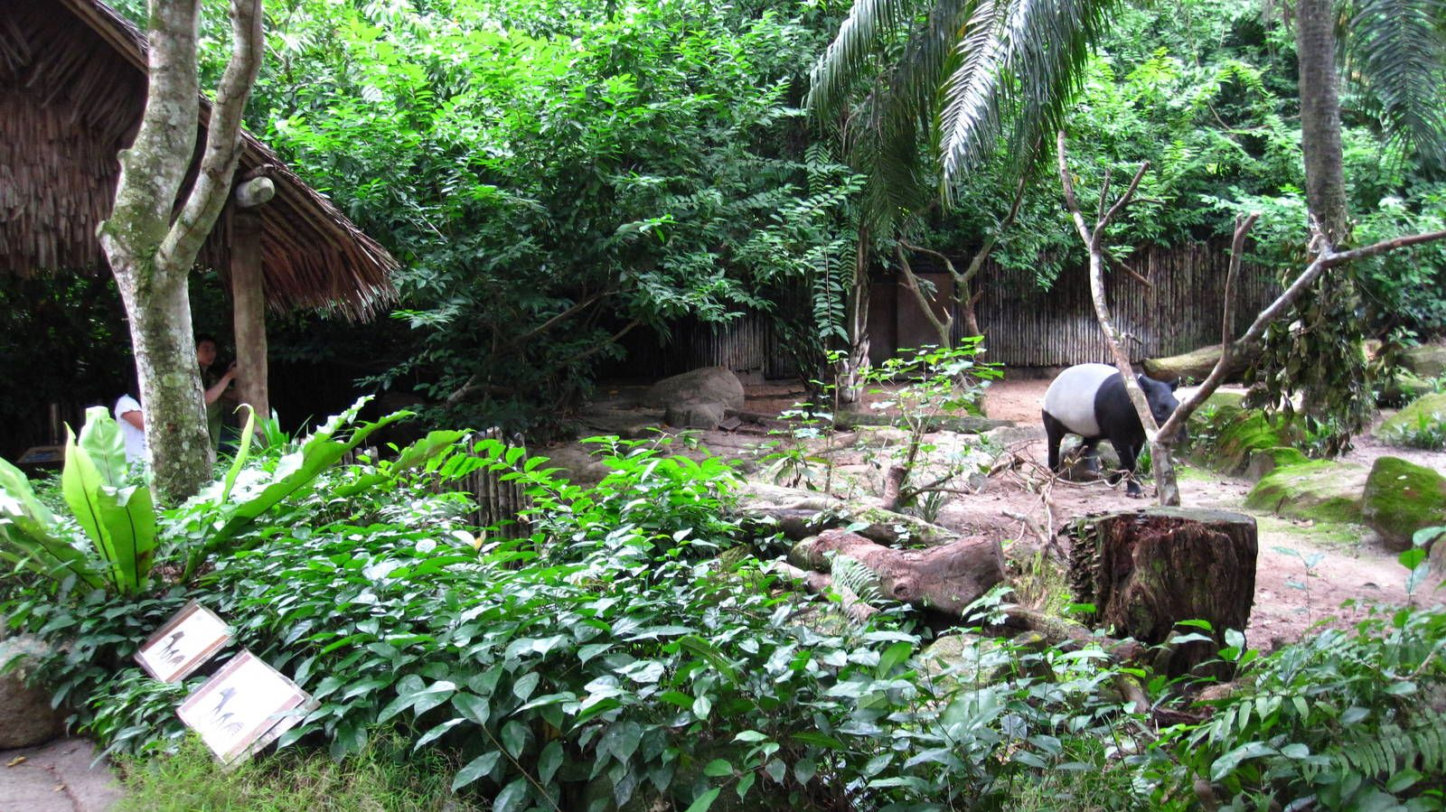 Is Singapore Zoo The Best Zoo In The World Never Ending Footsteps Singapore Zoo Outdoor Toilet Singapore