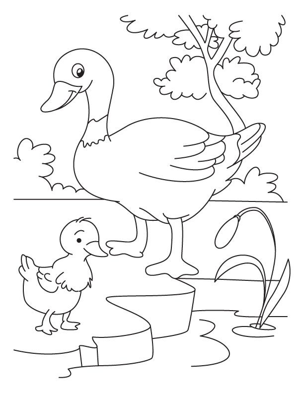 Duck And Duckling Coloring Page Duckling Detailed Coloring